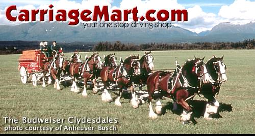 BUDWEISER HORSE CARRIAGE PARADE