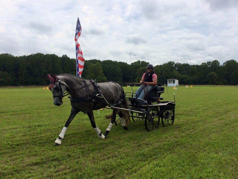 Kuhnle 191 horse size marathon carriage