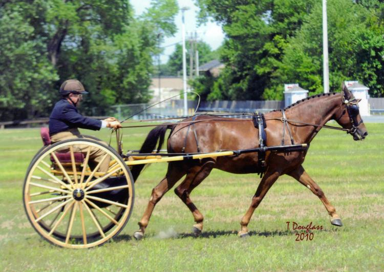Carriage Driving, Carriages for sale, horse carriages, horse